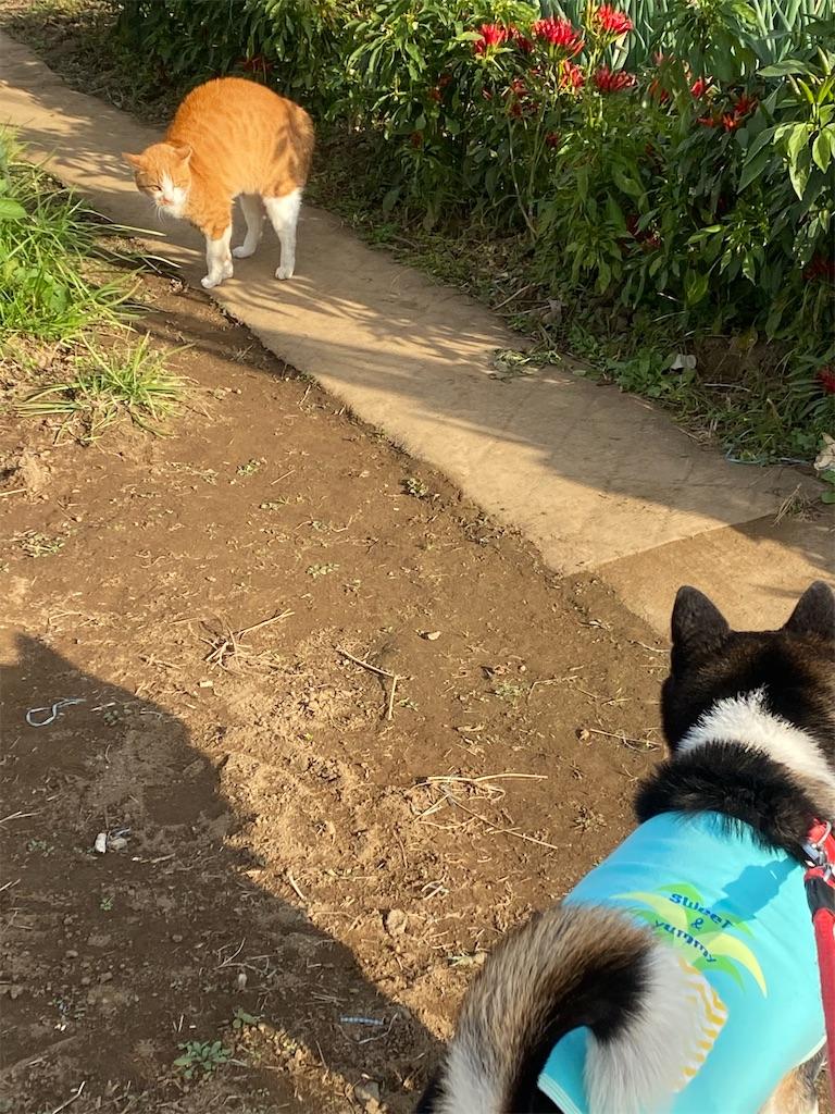 トラネコと黒柴犬が睨み合っている