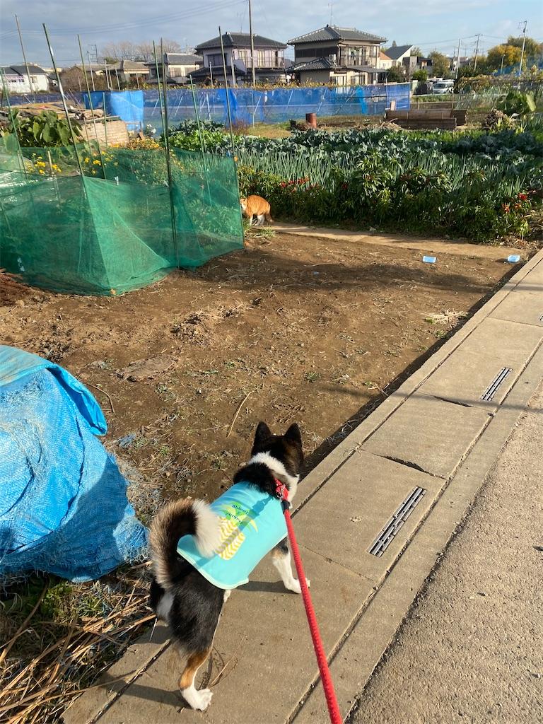 黒柴犬が遠くにいるネコちゃんを見ている