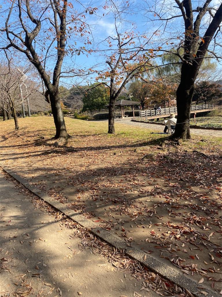 枯れ葉落ちてしまった樹木