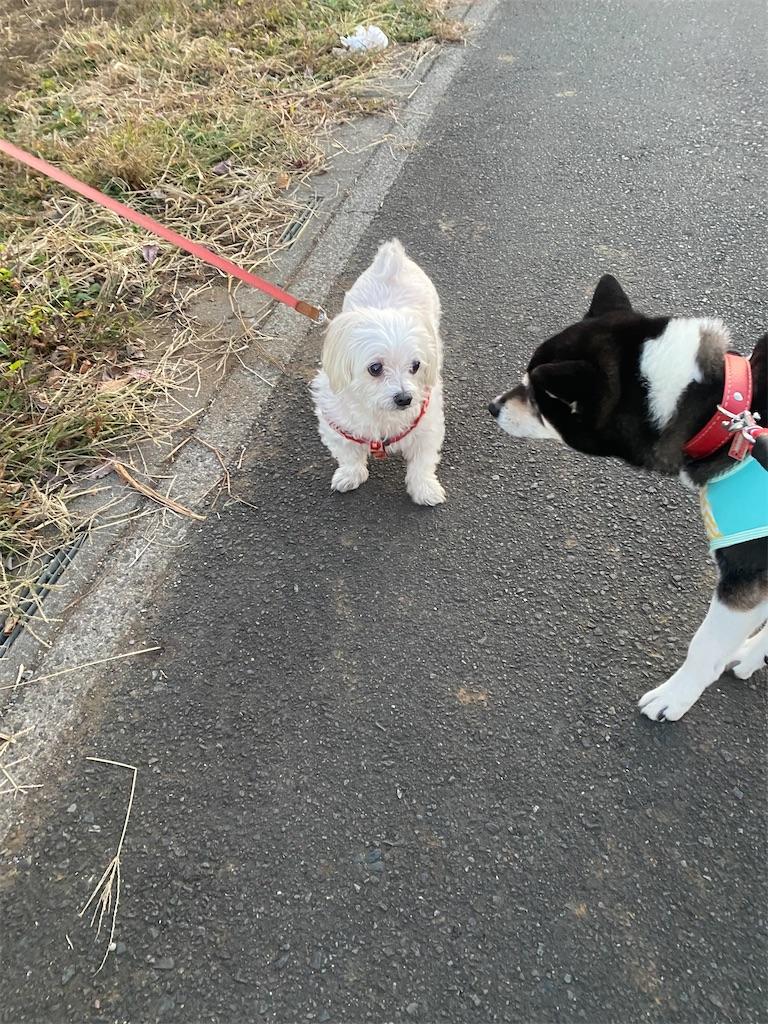 白いマルチーズと黒柴犬が顔を近づけている