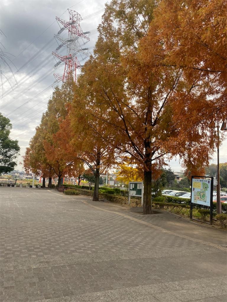 紅葉している並木道