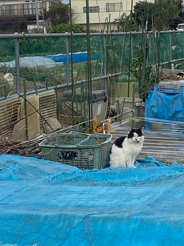 白黒のハチ割れネコが座っている