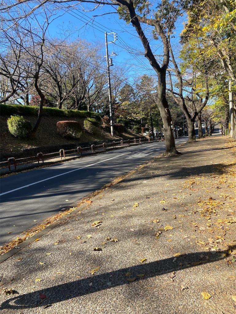 枯れ葉が散っている並木道