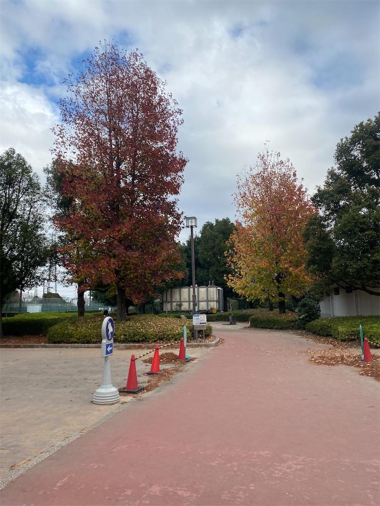 紅葉している樹木