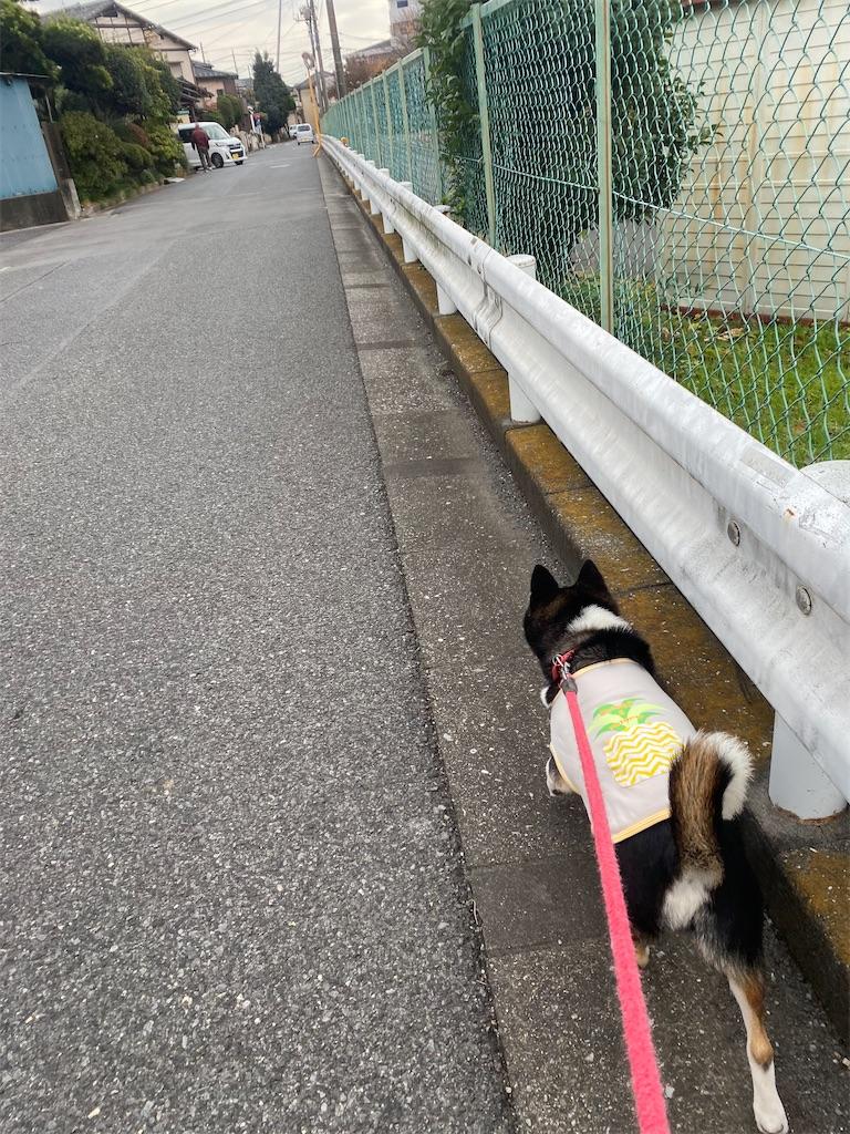 ガードレールに沿って歩いている黒柴犬