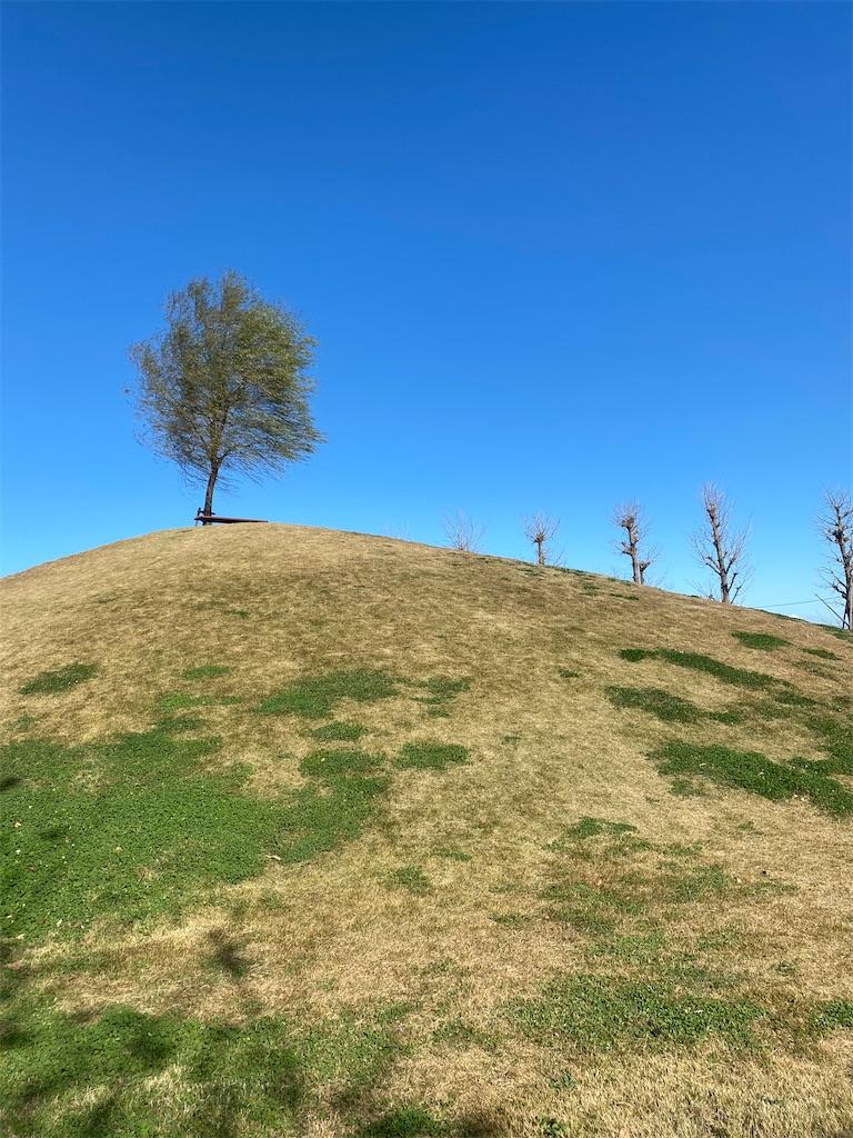 小高い丘のてっぺんに木が生えている