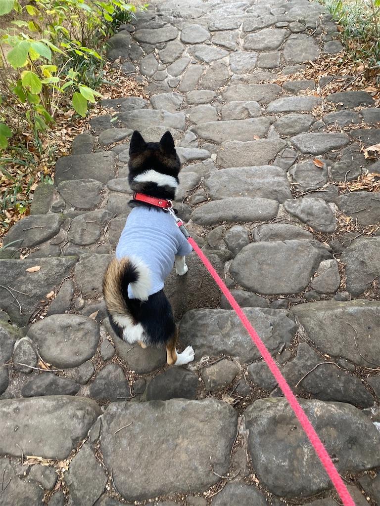 階段を下りる黒柴犬
