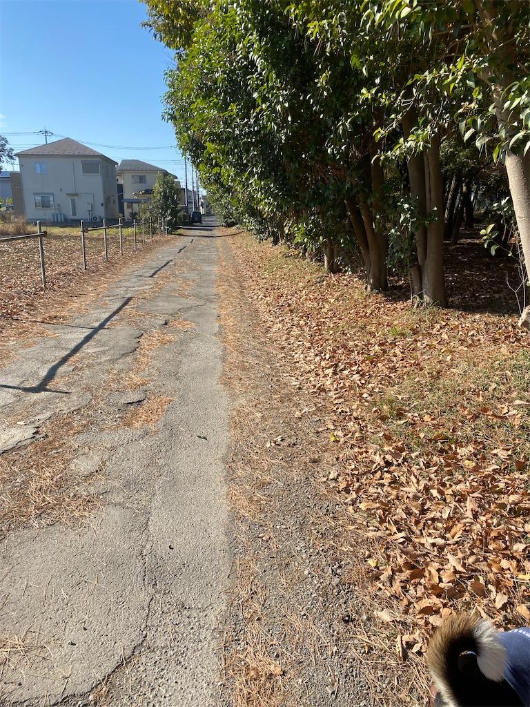 落ち葉が散っている並木道