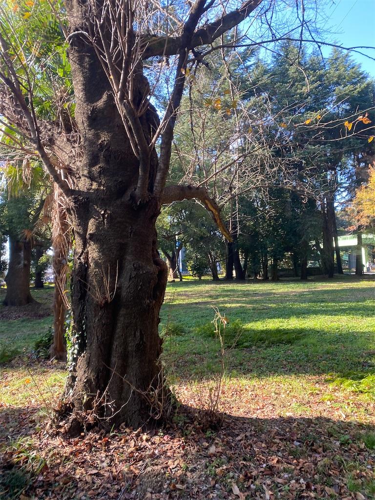 太い樹木とその下の落ち葉