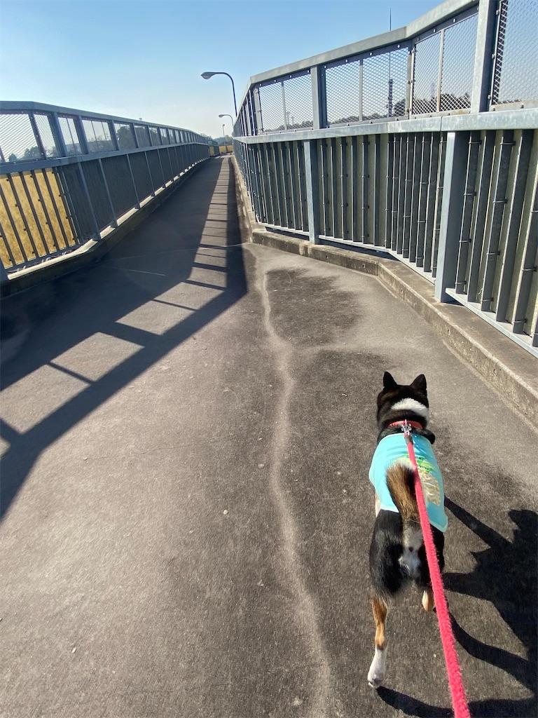 歩道橋を渡っている黒柴犬