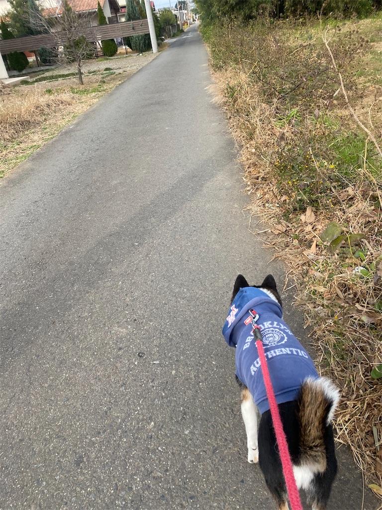 路肩を歩いている黒柴犬