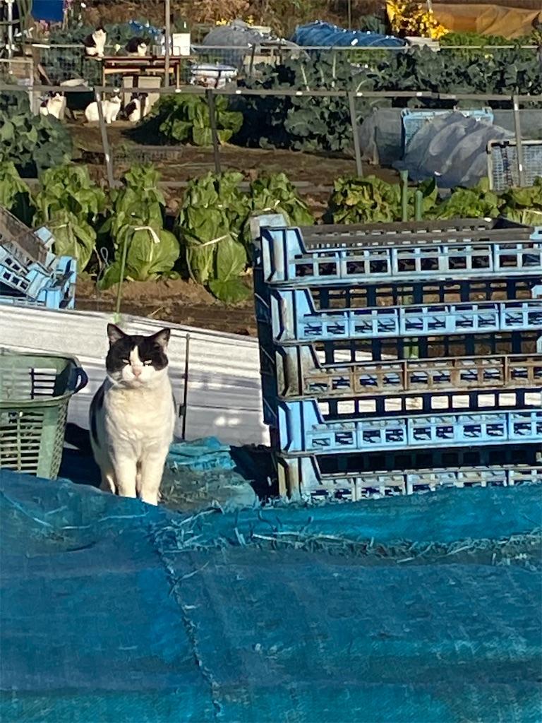 座って日向ぼっこをしている黒柴犬