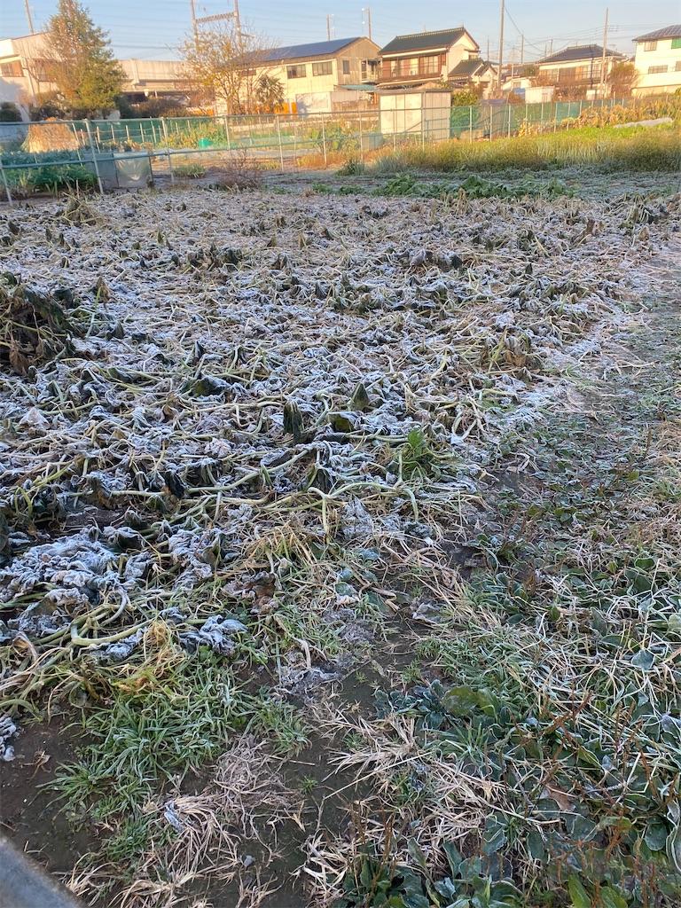 霜が降りている畑