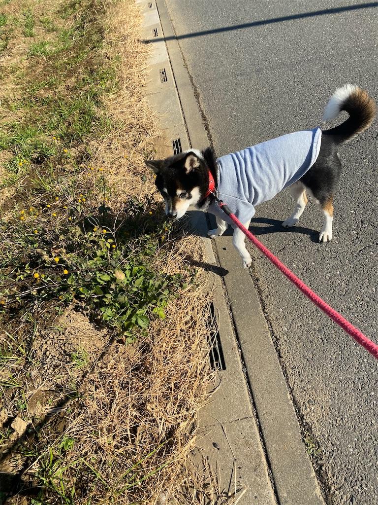 路肩で佇む黒柴犬