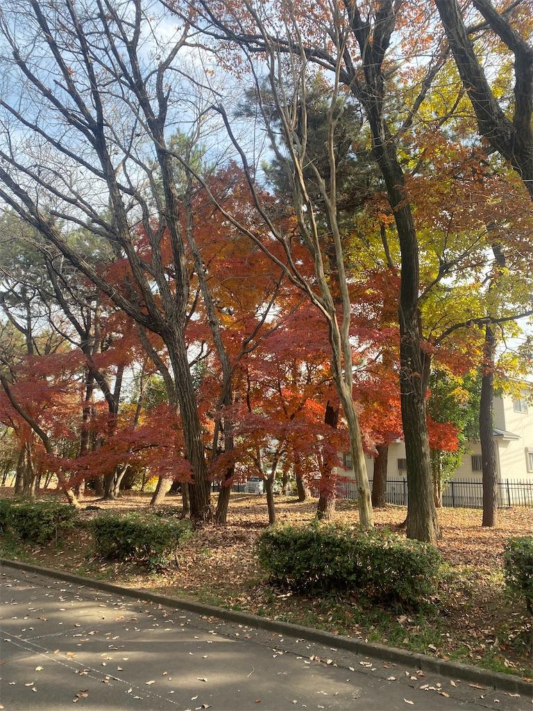 公園の紅葉した樹木