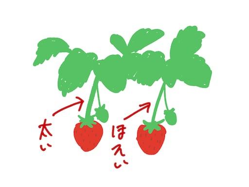 イチゴの茎