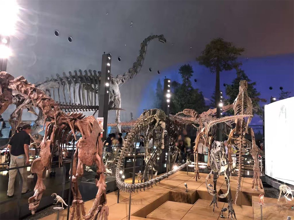 福井県立恐竜博物館の恐竜の化石の全身骨格