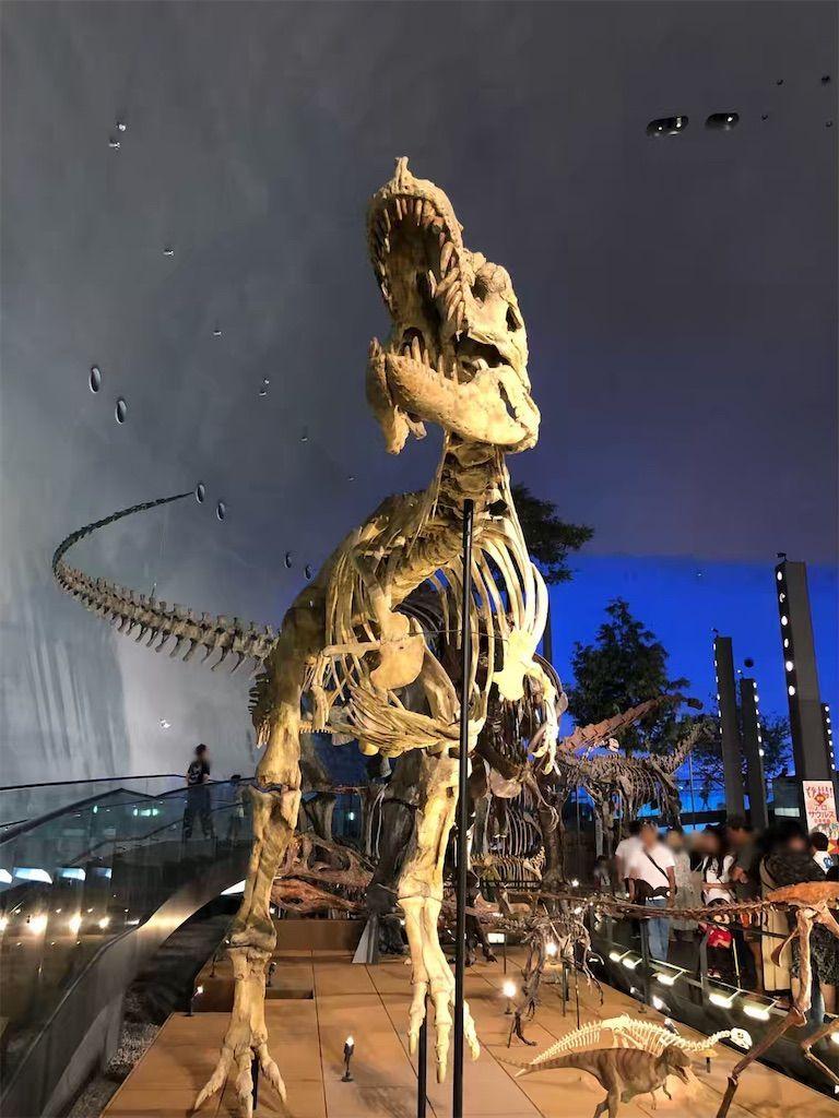 福井県立恐竜博物館の化石の展示物