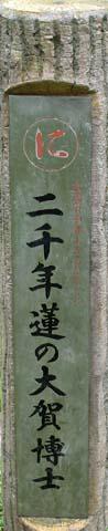 Hasu2008081