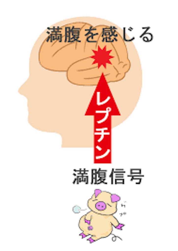 f:id:karatedo1234:20170301164356p:image
