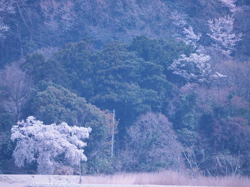 f:id:karaume:20210328172620j:plain