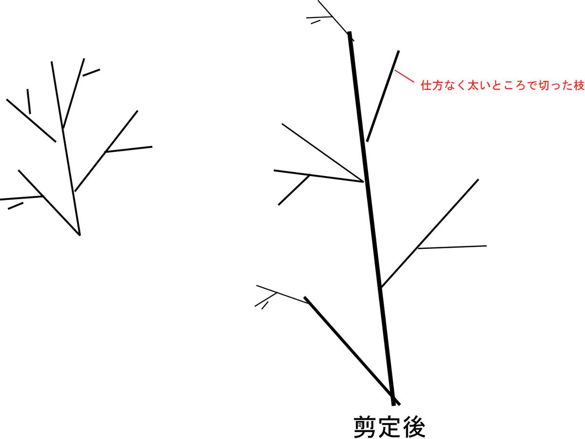 f:id:kare-eda:20210920160248j:plain