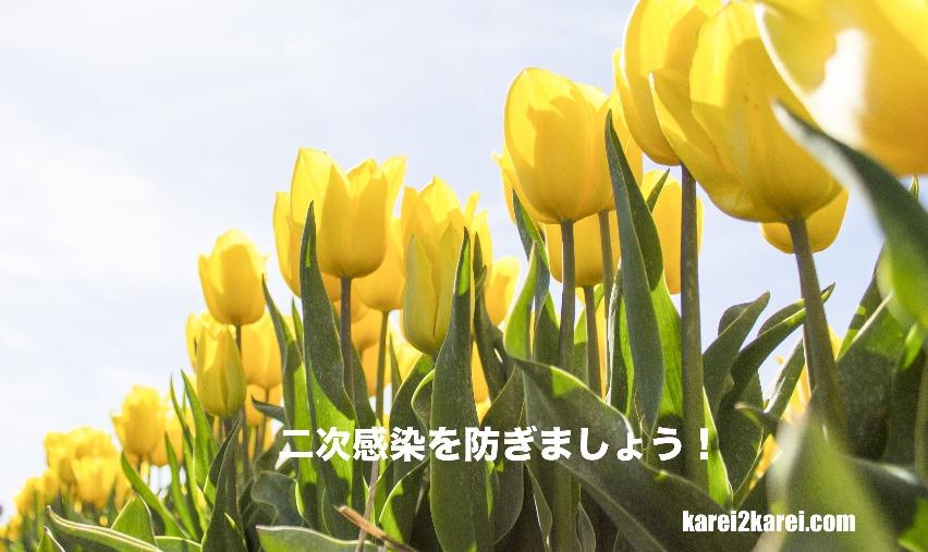 f:id:karei2karei:20200323191218j:plain