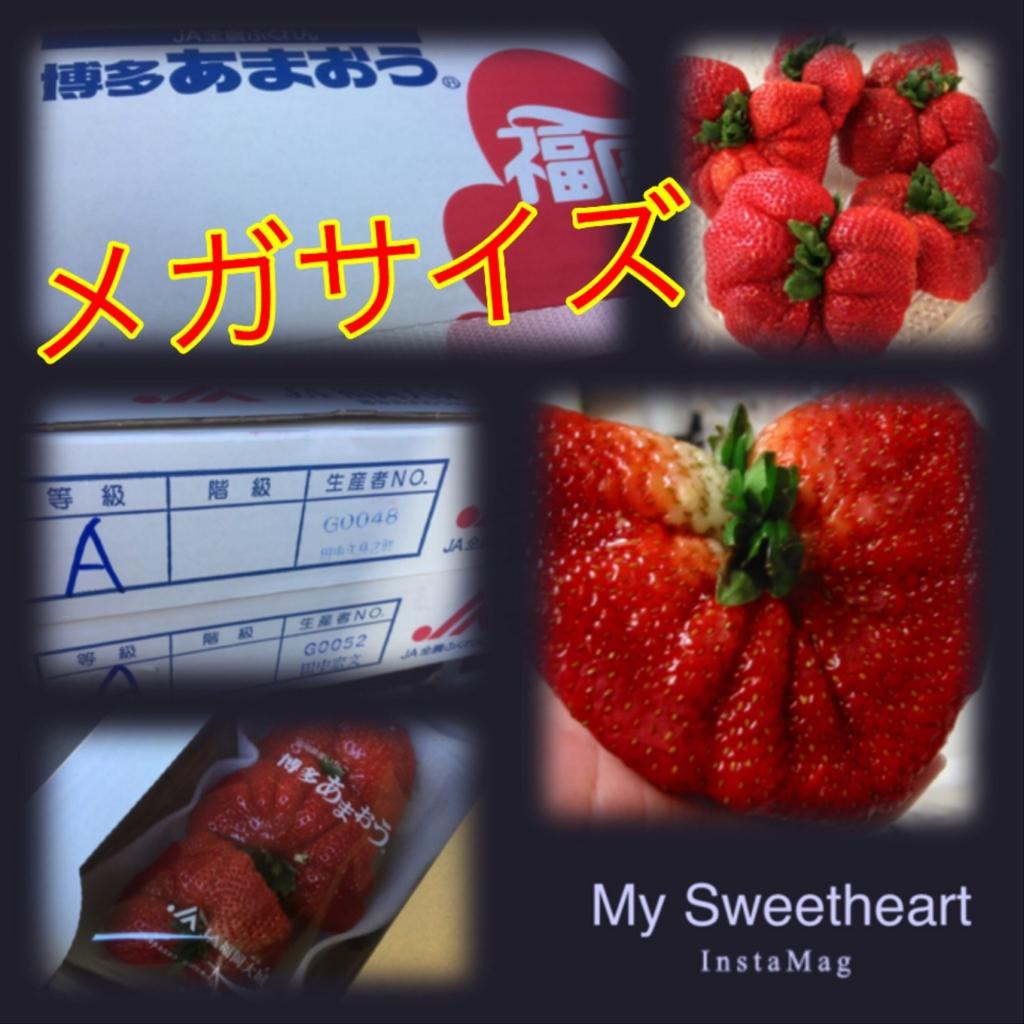 f:id:karin-matsugishi:20170130184216j:plain