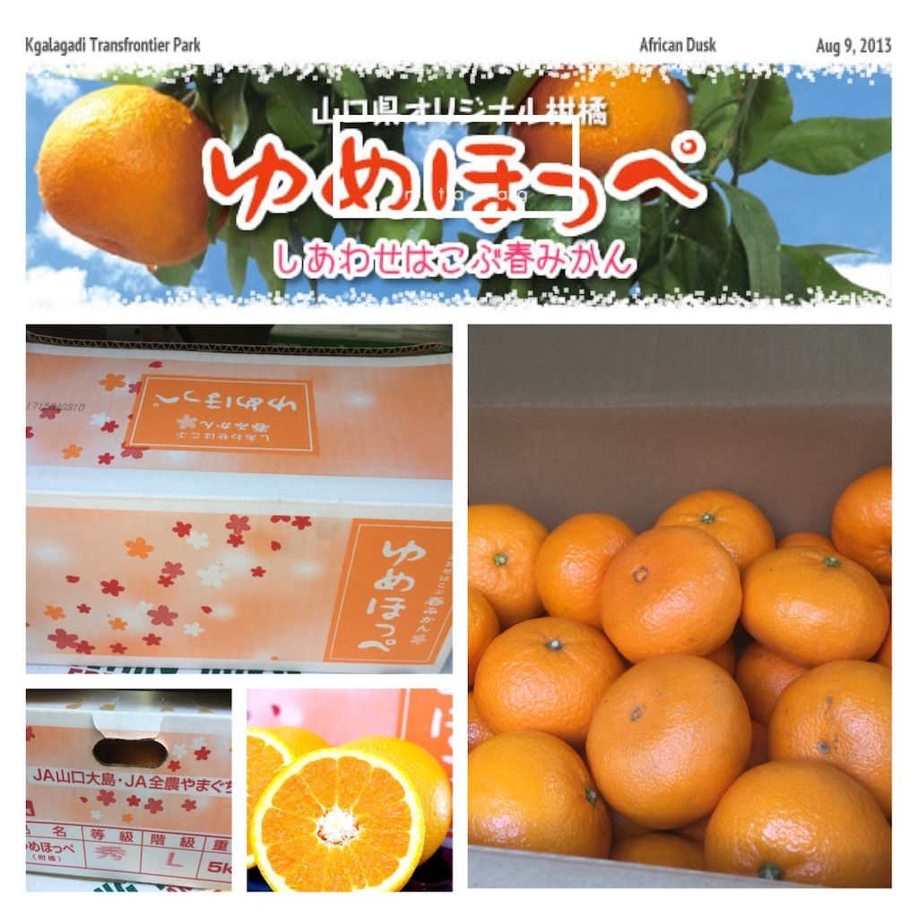 f:id:karin-matsugishi:20170318092239j:image