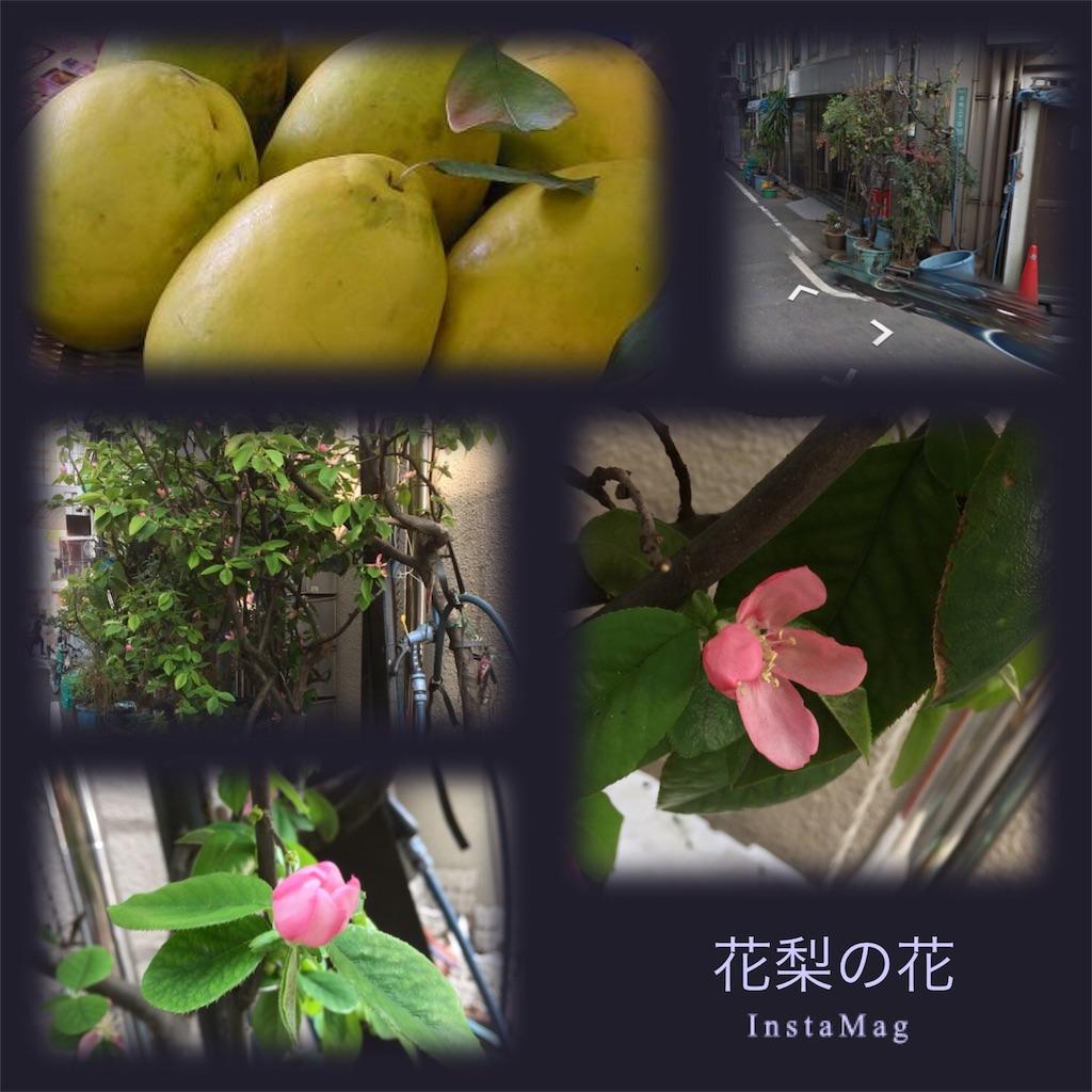 f:id:karin-matsugishi:20170414180128j:image