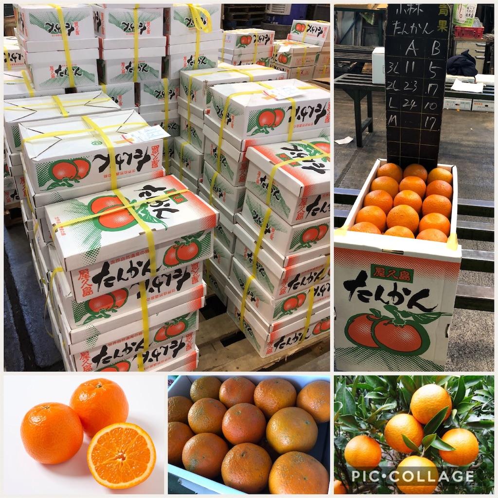 f:id:karin-matsugishi:20180217090429j:image