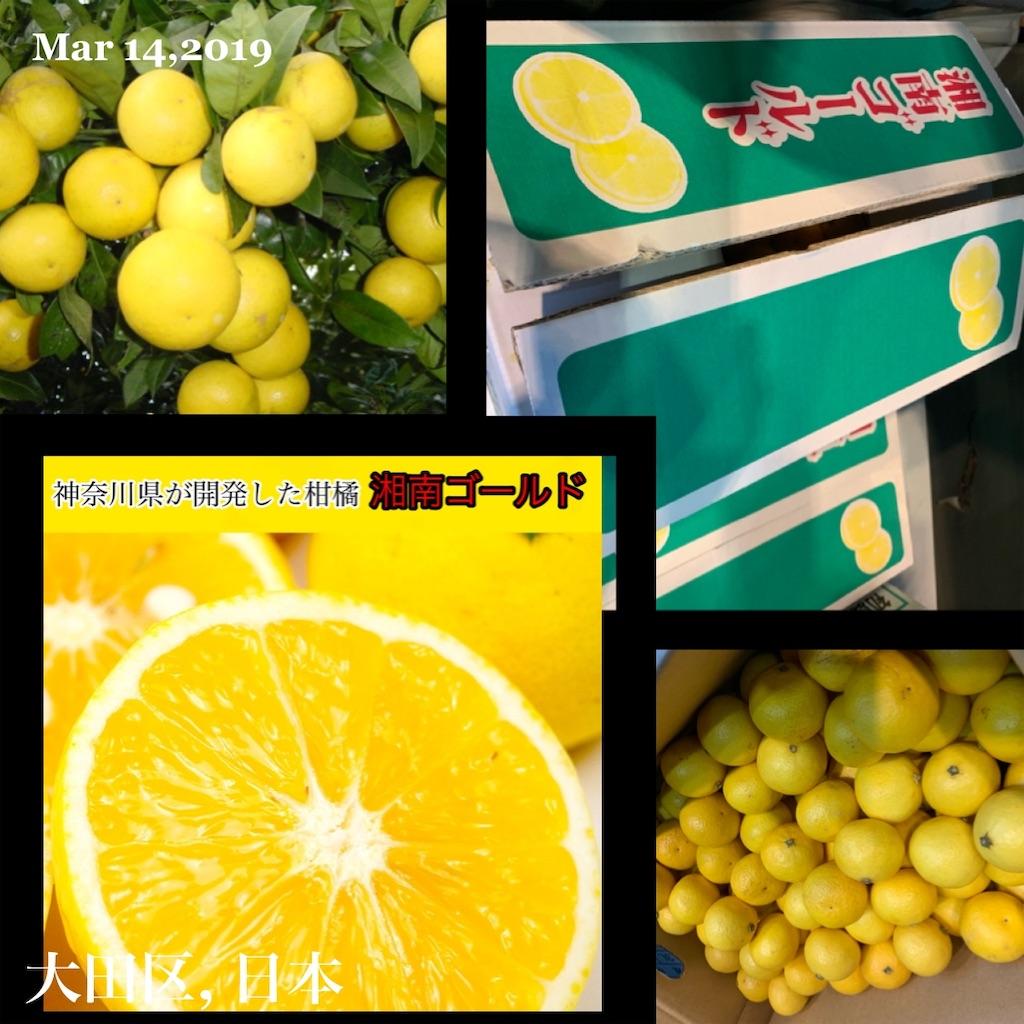 f:id:karin-matsugishi:20190314135919j:image