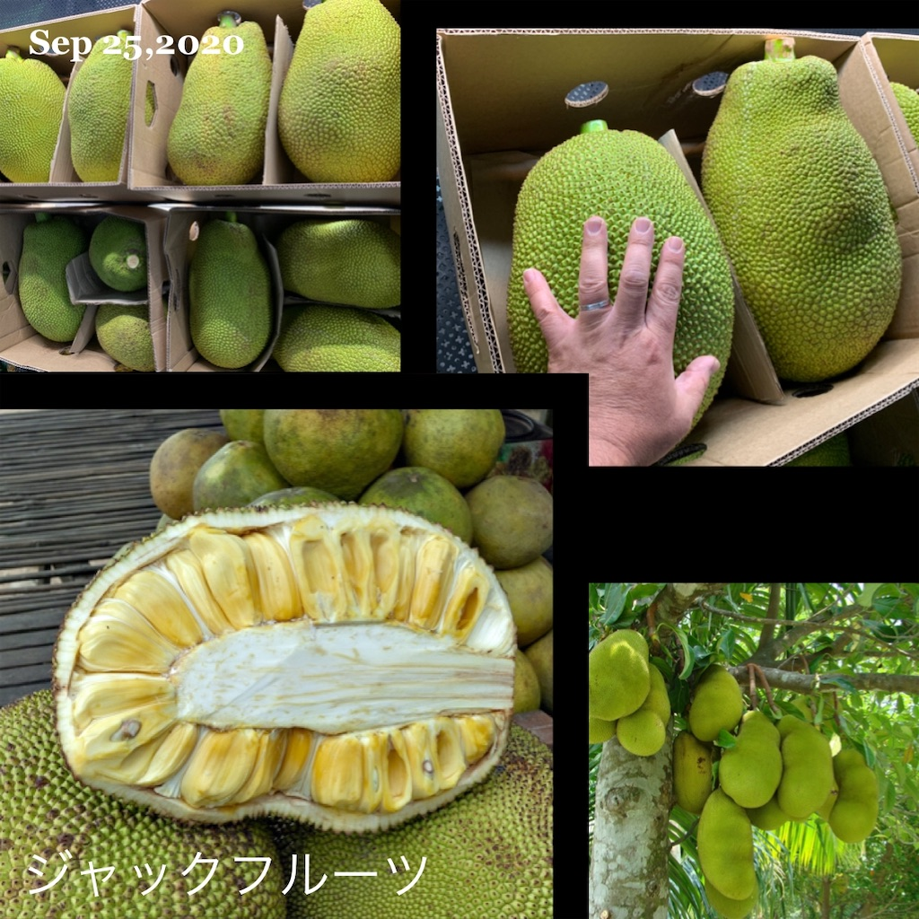 f:id:karin-matsugishi:20200925092655j:image