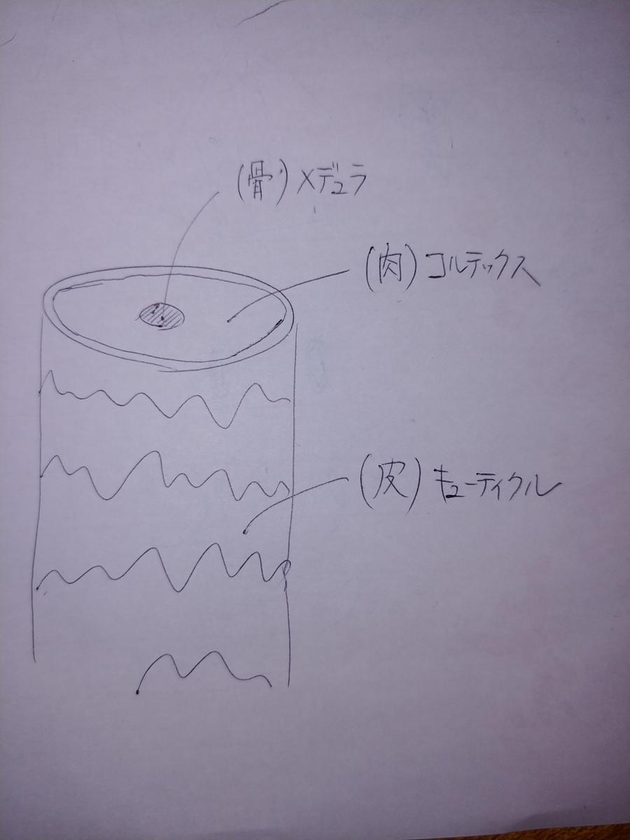 f:id:karisuman:20200328005713j:plain