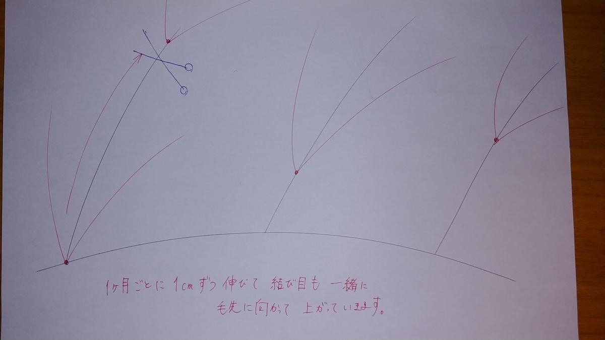 f:id:karisuman:20200506015130j:plain