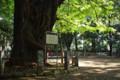氷川神社(赤坂)その2