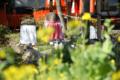 平野神社のおじぞうさん