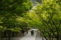 南禅寺も緑でいっぱい