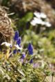 青い花の方がメインで!