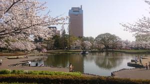 幸の池と群馬県庁