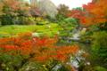 京都新聞写真コンテスト 「晩秋の余香苑」