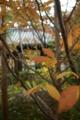 京都新聞写真コンテスト 「紗羅の葉」