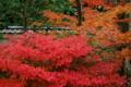 京都新聞写真コンテスト 「赤い小路」