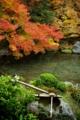 京都新聞写真コンテスト 「季節愛でる手水鉢」