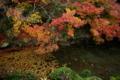 京都新聞写真コンテスト 「水辺の晩秋」