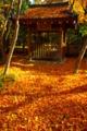 京都新聞写真コンテスト 「井戸屋形に散りもみじ」