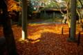 京都新聞写真コンテスト 「参道の石仏」