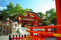 京都新聞写真コンテスト 「お稲荷さんの歳旦祭」