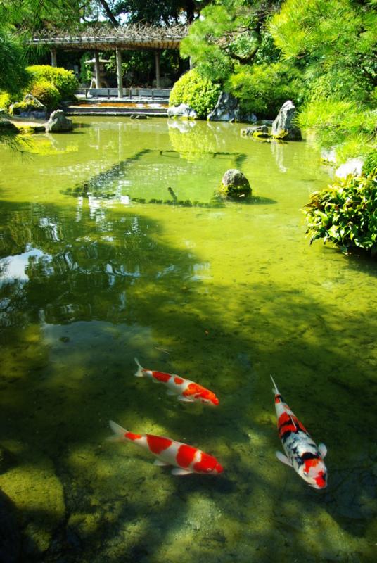 京都新聞写真コンテスト 「巣離れ」