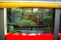 京都新聞写真コンテスト 「桟敷窓から見た お内裏様とお雛様」